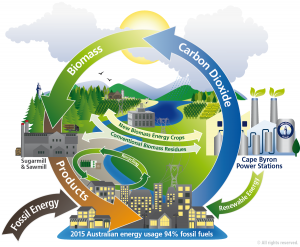 cbp_biomass_cycle_graphic