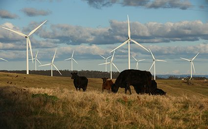 Merchant model no dealbreaker for wind investors, CEFC