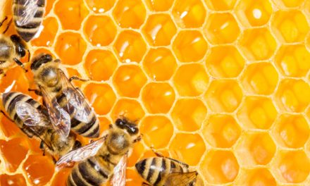 Retail entrant Energy Locals offers 10c/kWh FiT honey to solar owners