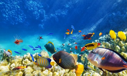 The simple efficiency measures that halved Reef HQ Aquarium's energy consumption