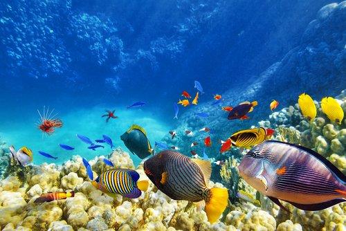The simple efficiency measures that halved Reef HQ Aquarium's energy consumption