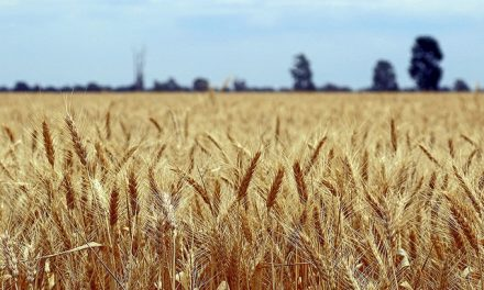 Equity investment brings clean energy focus to Australian agriculture