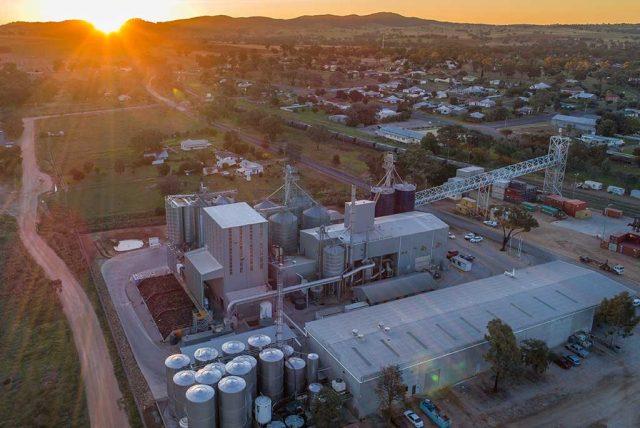 Canola plant embraces bioenergy