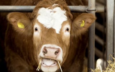 Abattoir powered by renewables to deliver Gladstone jobs