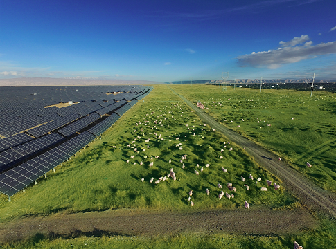 Renewables power on despite recession: CER report